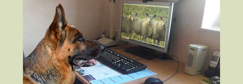 ein Schäferhund sitzt vor einem Bildschirm